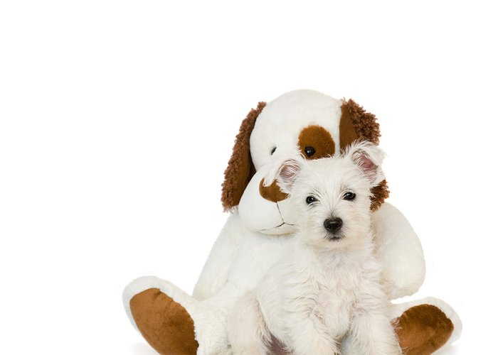 Photo Greeting Card featuring the photograph Westie Puppy And Teddy Bear by Natalie Kinnear