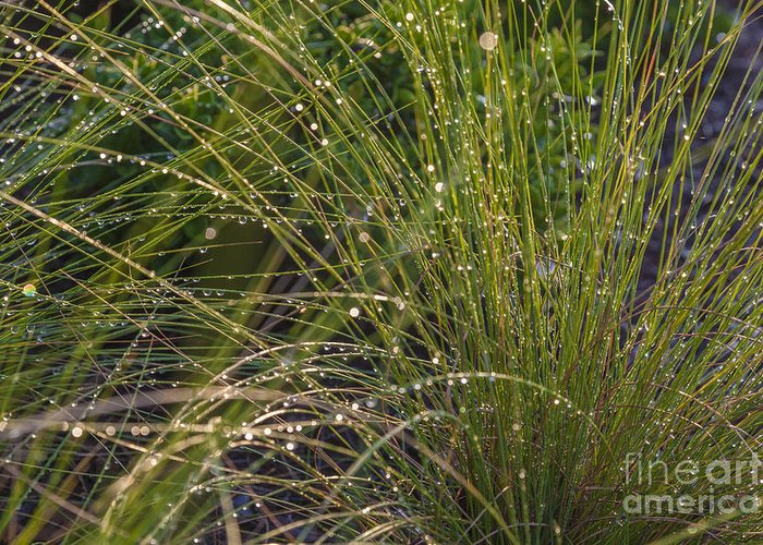 Beauty In Nature Greeting Card featuring the photograph Wet Grass by Juan Silva