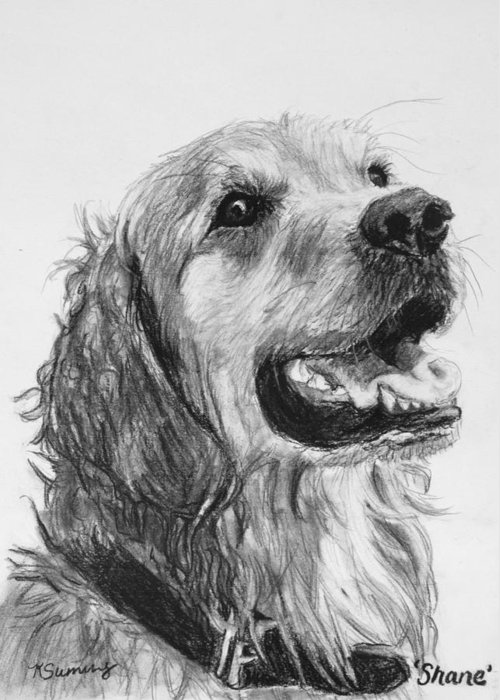 Golden Retriever Greeting Card featuring the drawing Wet Smiling Golden Retriever Shane by Kate Sumners