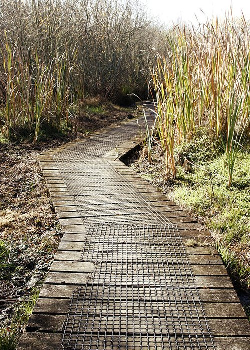 Boardwalk Greeting Card featuring the photograph Wetland Walk by Les Cunliffe