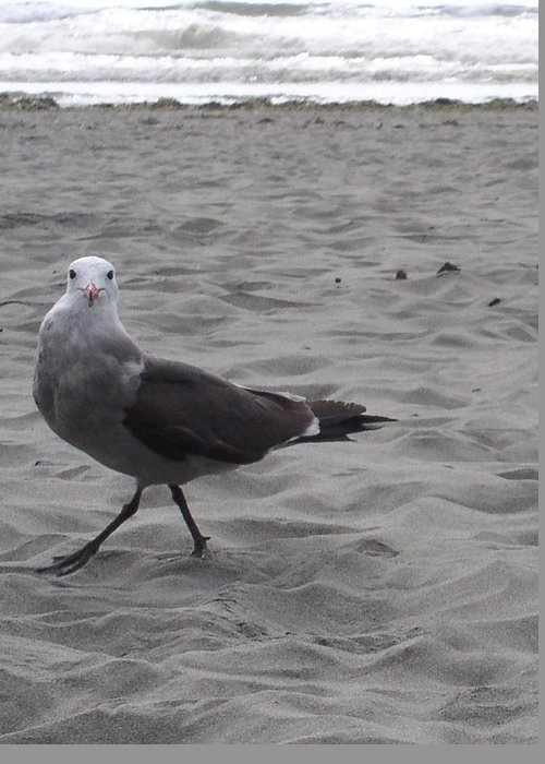 Seagull Greeting Card featuring the photograph What are you looking at by Valerie Josi