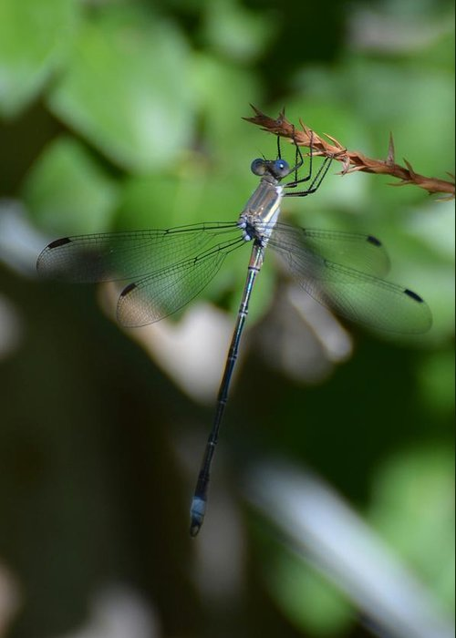 Dragonfly Greeting Card featuring the photograph What Big Blue Eyes You Have by Paulina Roybal