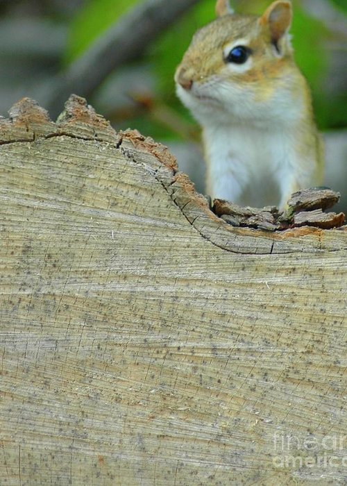 Chipmunk Greeting Card featuring the photograph What's Up by Kathleen Struckle
