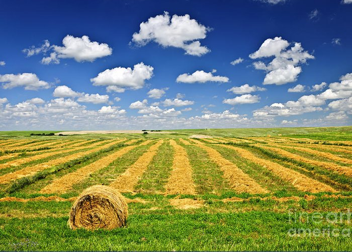 Agriculture Greeting Card featuring the photograph Wheat Farm Field And Hay Bales At Harvest In Saskatchewan by Elena Elisseeva