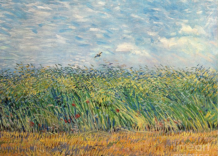 Wheatfield Greeting Cards
