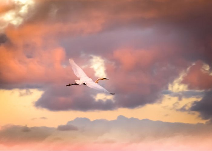 Egrets In Flight Greeting Card featuring the photograph When Heaven Beckons by Karen Wiles