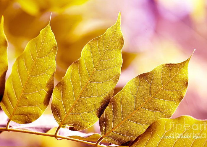 Gold Leaves Greeting Card featuring the photograph When The Leaves Turn Gold by Artist and Photographer Laura Wrede