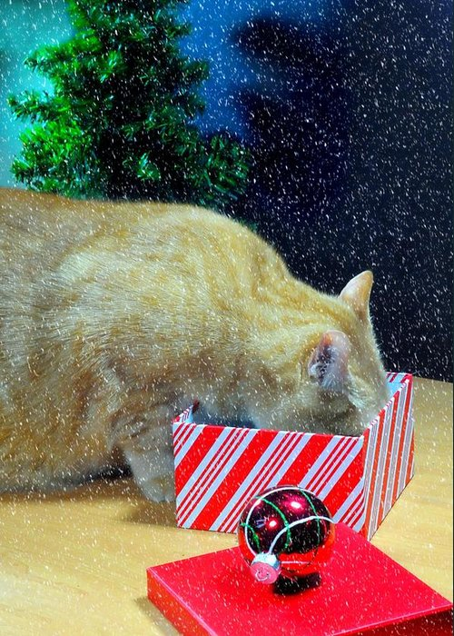 orange Tabby Greeting Card featuring the photograph Whiskey's Present by Diana Angstadt