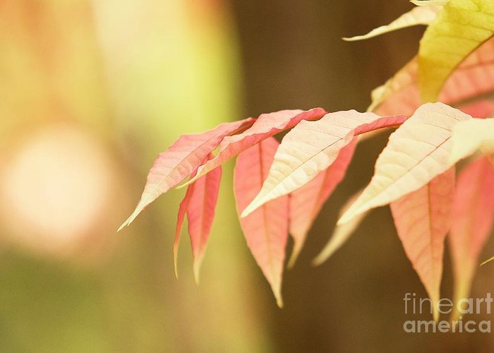 Leaves Greeting Card featuring the photograph Whisper by Andrew Brooks