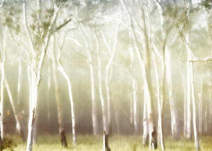 Landscapes Greeting Card featuring the photograph Whisper The Trees by Holly Kempe