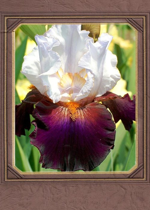 Iris Greeting Card featuring the photograph White And Purple Iris by Mark Szep