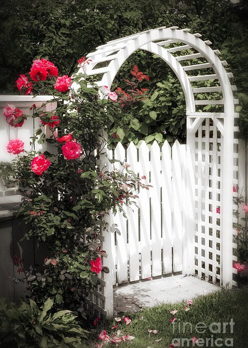 Trellis Greeting Card featuring the photograph White Arbor With Red Roses by Elena Elisseeva