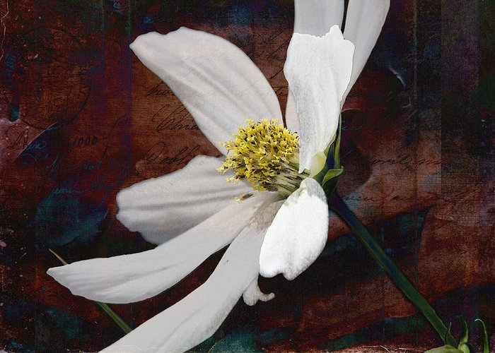 Garden Greeting Card featuring the photograph White Aster Study Iv - Titled by AGeekonaBike Fine