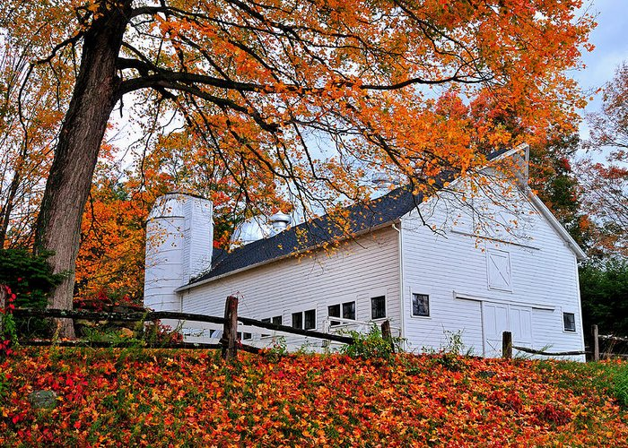 Barn Greeting Card featuring the photograph White Barn And Silo by Thomas Schoeller