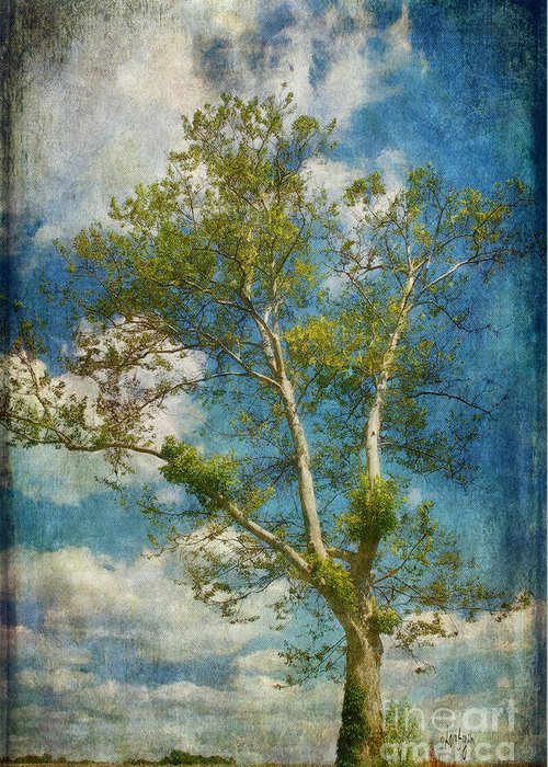 Tree Greeting Card featuring the photograph White Birch In May by Lois Bryan