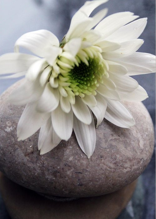 Flower Greeting Card featuring the photograph White Blossom On Rocks by Linda Woods