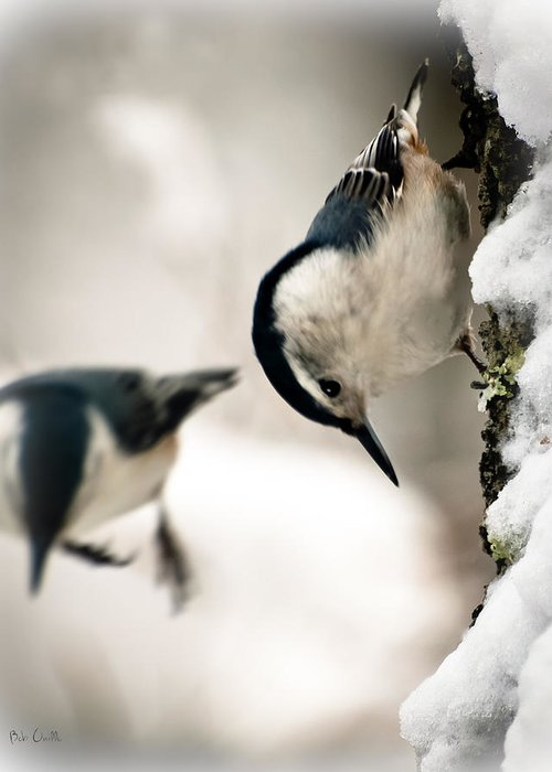 Nuthatch Greeting Card featuring the photograph White Breasted Nuthatch In The Snow by Bob Orsillo