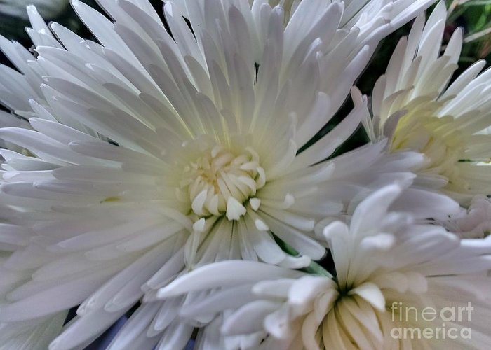 White Greeting Card featuring the photograph White Flowers by Lisa Byrne