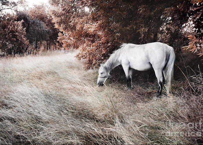 Horse Greeting Card featuring the photograph White Horse by Jelena Jovanovic