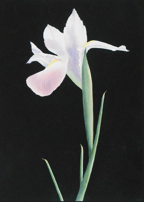 White Greeting Card featuring the painting White Iris by Jean Yates