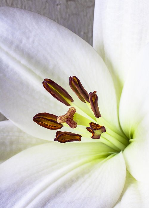 White Lily Greeting Card featuring the photograph White Lily Close Up by Garry Gay
