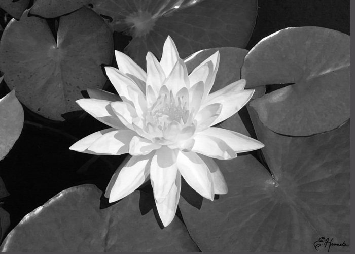 White Lotus Greeting Card featuring the painting White Lotus 2 by Ellen Henneke