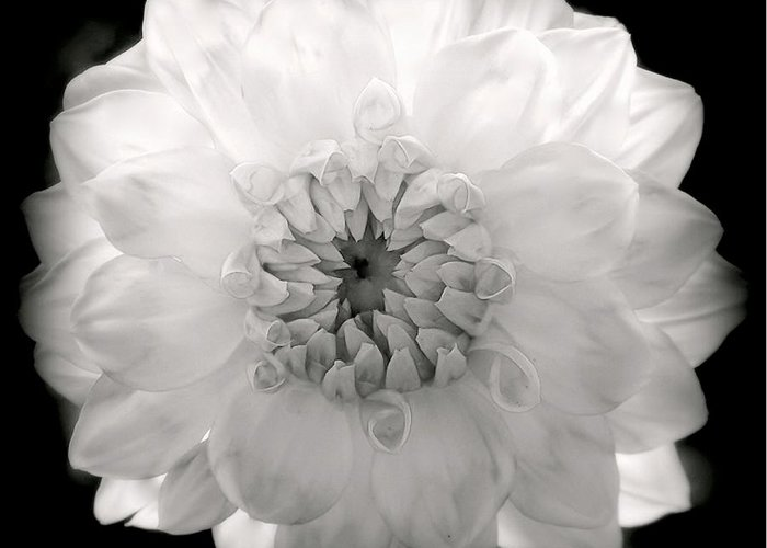 White Flowers Greeting Card featuring the photograph White Magic by Karen Wiles
