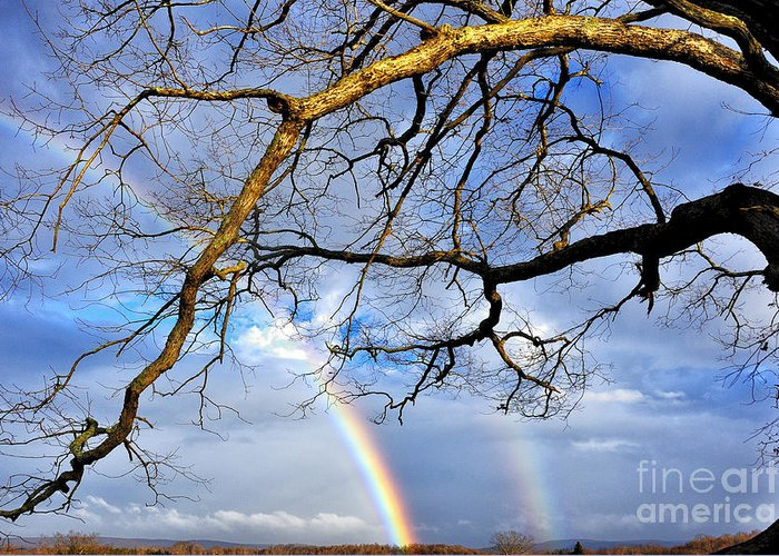 Rainbow Greeting Card featuring the photograph White Oak And Double Rainbow by Thomas R Fletcher