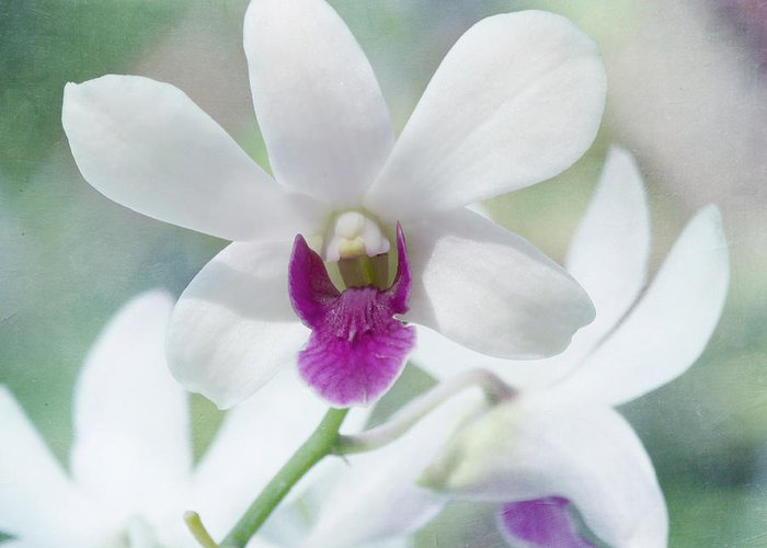 Orchid Greeting Card featuring the photograph White Orchid by Kim Hojnacki