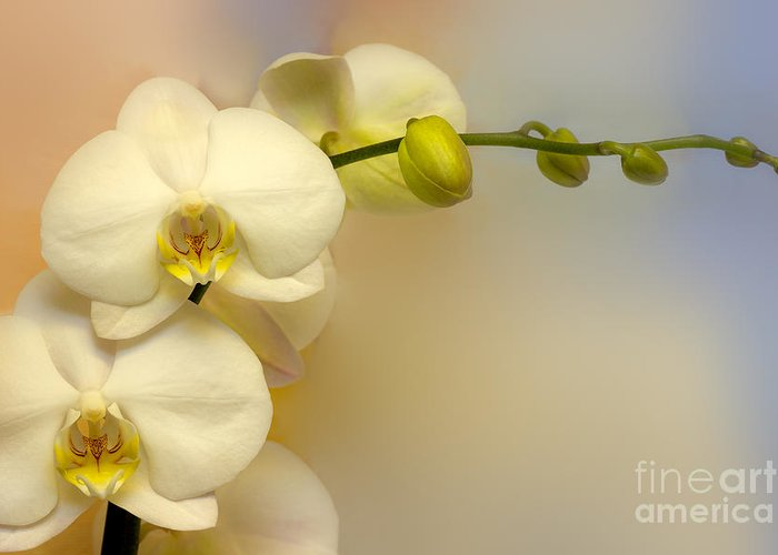 Pale Colors Greeting Cards