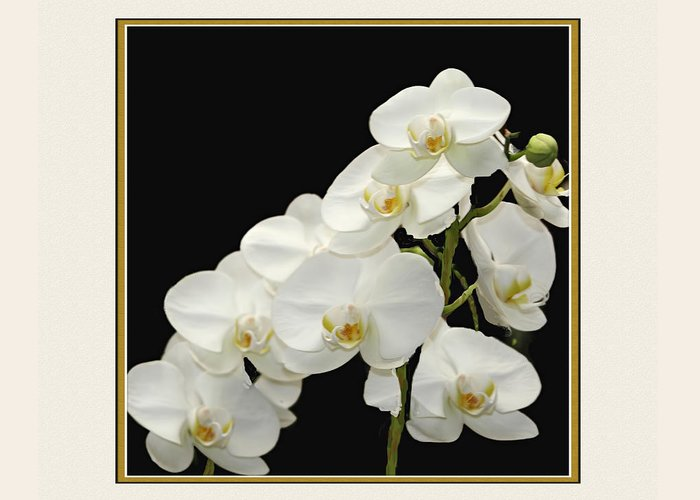 White Orchids Greeting Card featuring the photograph White Orchids II by Tom Prendergast