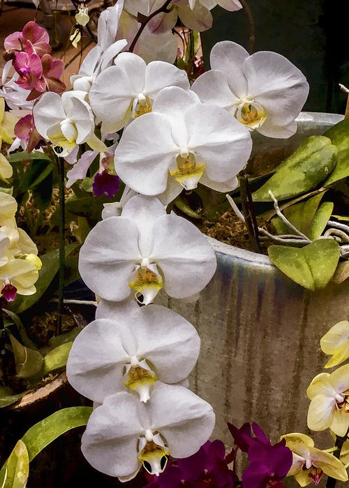 White Greeting Card featuring the digital art White Orchids by Photographic Art by Russel Ray Photos