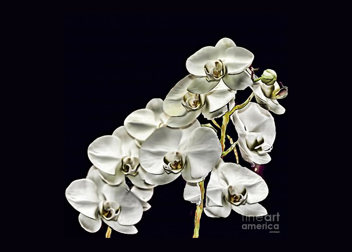 White Orchids Greeting Card featuring the photograph White Orchids by Tom Prendergast