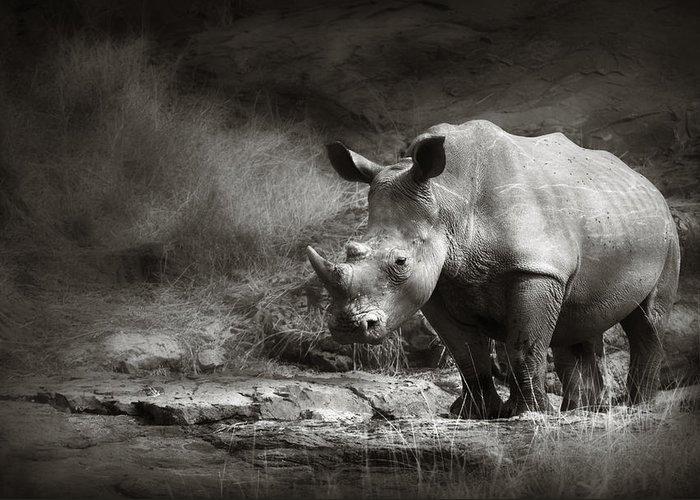 Rhinoceros; Rhino; White; Stand; Rocky; Terrain; Art; Artistic; Monochrome; Black; White; B&w; Wild; Wildlife; Mammal; Animal; Outdoor; Nature; Africa; One; Nobody; Safari; Wilderness; Solitude; Ceratotherium; Endangered; Rock Greeting Card featuring the photograph White Rhinoceros by Johan Swanepoel