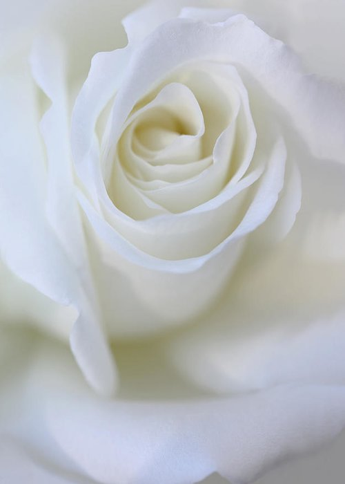 Rose Greeting Card featuring the photograph White Rose Floral Whispers by Jennie Marie Schell
