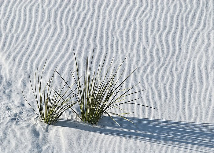 White Greeting Card featuring the photograph White Sands Grasses by Steve Gadomski
