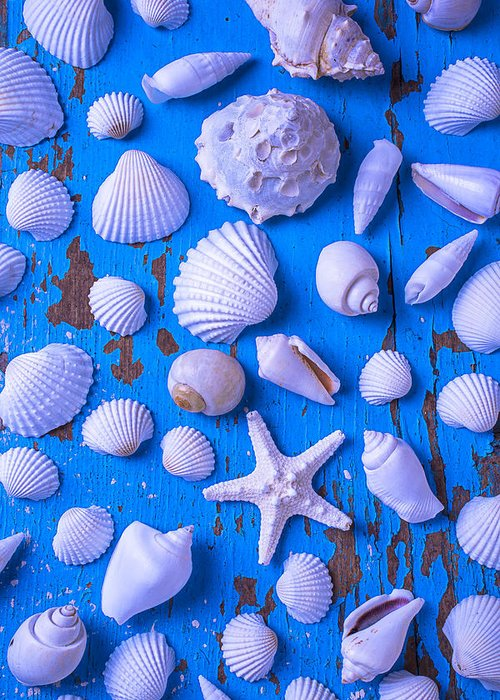 White Greeting Card featuring the photograph White Sea Shells On Blue Board by Garry Gay