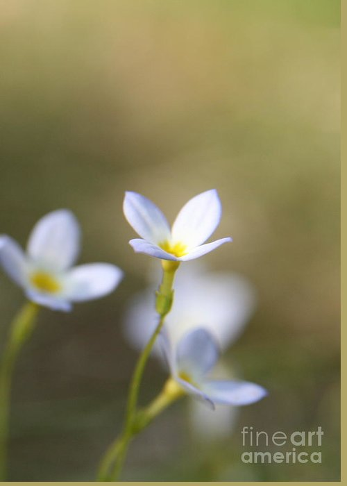 White Flower Greeting Card featuring the photograph White Serenity by Neal Eslinger