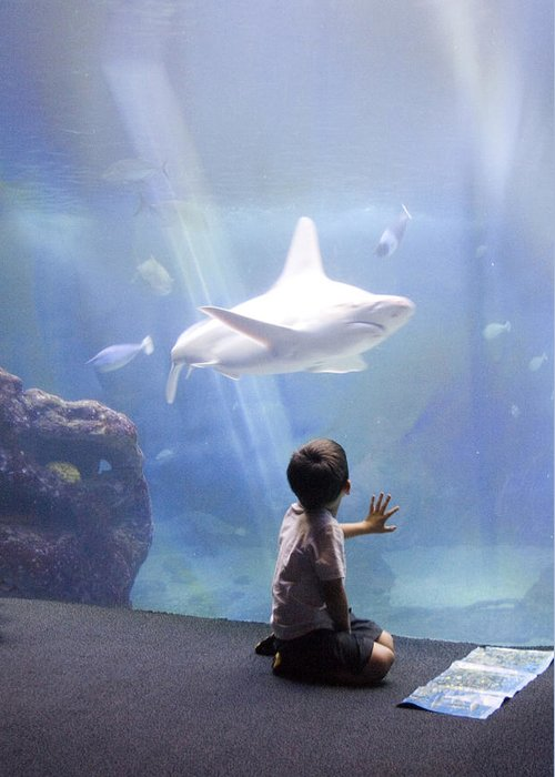 Lahaina Greeting Card featuring the photograph White Shark And Young Boy by David Smith