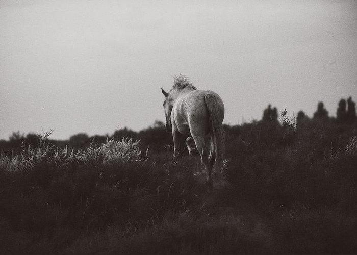 Horse Greeting Card featuring the photograph White Solo Camargue by Sue Westwood