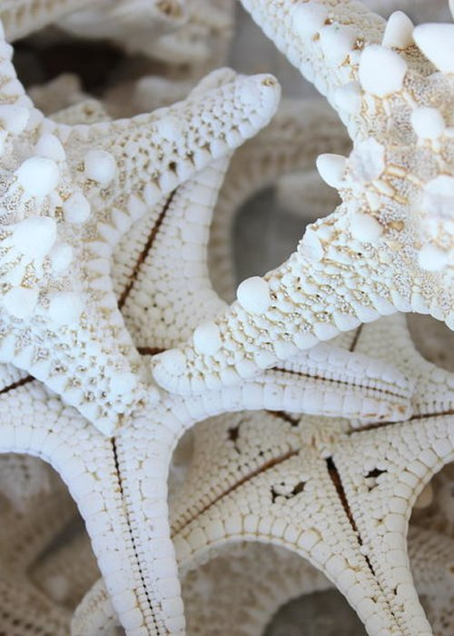 White Greeting Card featuring the photograph White Starfish by Carol Groenen