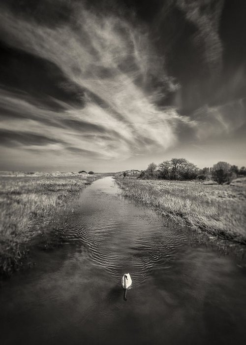 White Swan Greeting Card featuring the photograph White Swan by Dave Bowman