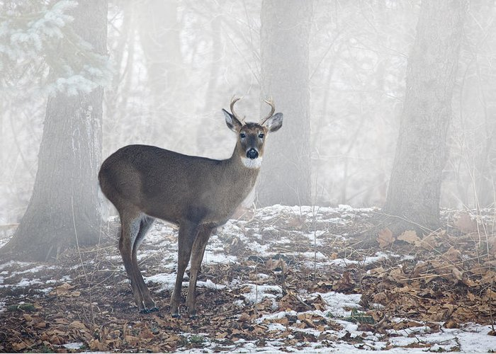 Art Greeting Card featuring the photograph White Tailed Deer Buck In The Mist by Randall Nyhof