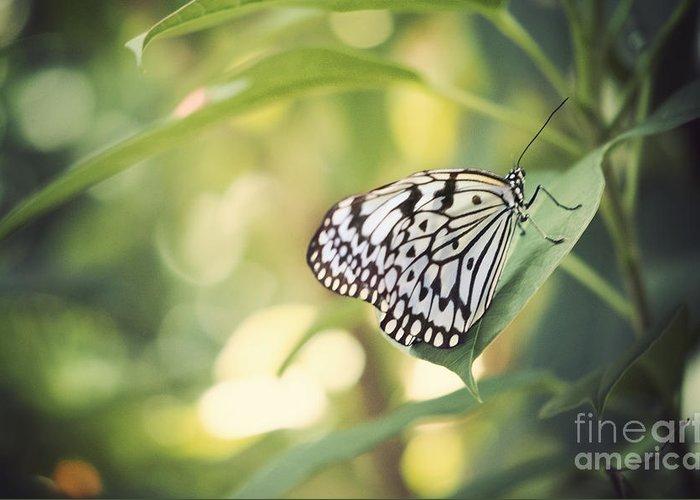 Farfalla Greeting Card featuring the photograph White Tree Nymph by Juli Scalzi