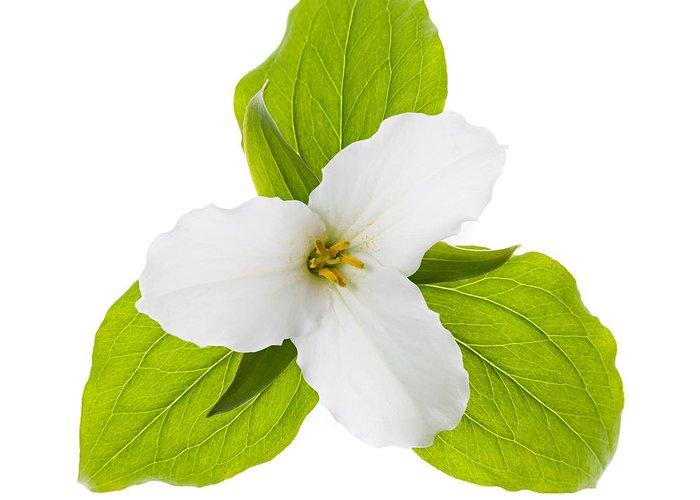 Trillium Greeting Card featuring the photograph White Trillium Flower by Elena Elisseeva