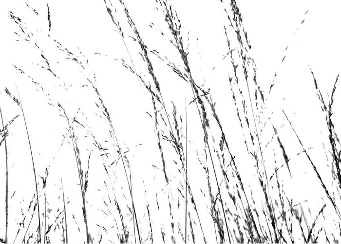 Dining Room Greeting Card featuring the photograph Wild Grasses Abstract by Natalie Kinnear