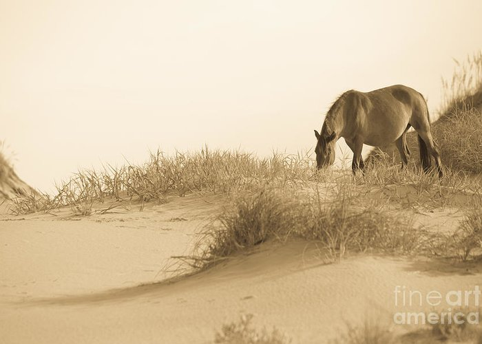 Horse Greeting Card featuring the photograph Wild Horse by Diane Diederich
