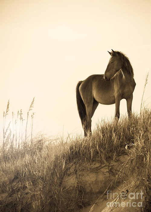 Horse Greeting Card featuring the photograph Wild Horse On The Beach by Diane Diederich