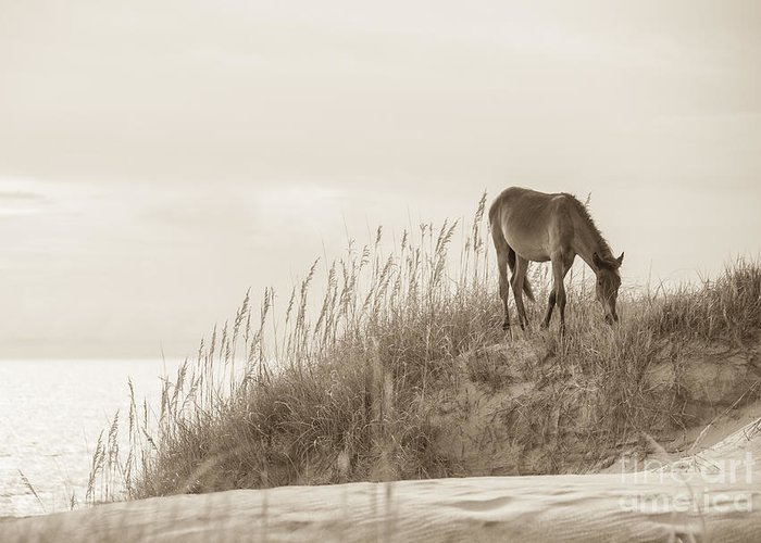 Horse Greeting Card featuring the photograph Wild Horse On The Outer Banks by Diane Diederich