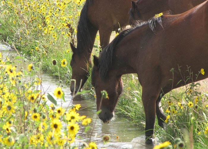 Wild Horses Greeting Card featuring the photograph Wild Horses by Marianne Werner
